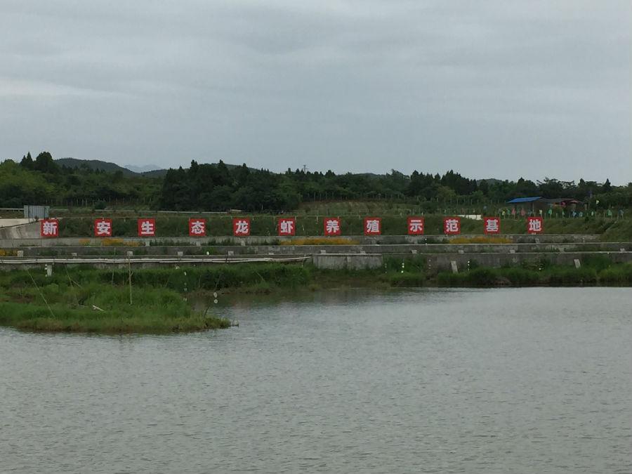 农村小龙虾养殖池塘设计图